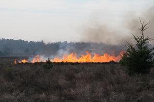 Staatsbosbeheer heeft kleine percelen heide gebrand